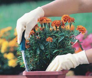 Вновь соберутся садоводы