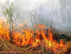 низовой-пожар