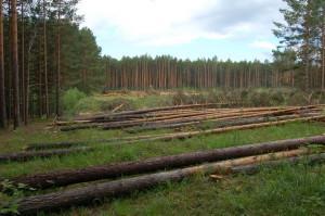 Вырубки леса
