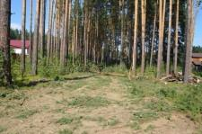 Лес рубят6