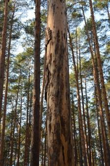 Больные деревья