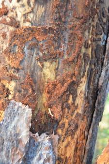 Больные деревья2