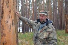 Лесопатолог Андрей Владимирович Дмитриев осматривает поврежденные деревья