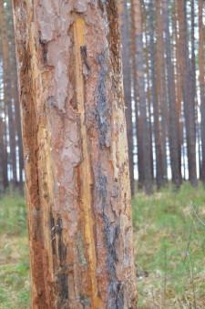Поврежденные деревья2