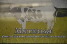 Коровы-рекордсменки