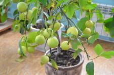 усадьба Левандовский7 лимон