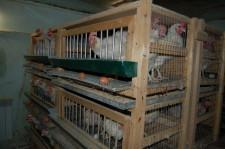 Арамильские птицы 6
