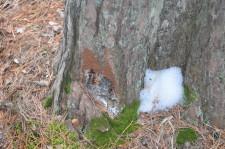 Рубят лес2
