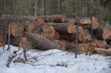 Рубят лес3