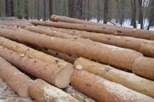Рубят лес4