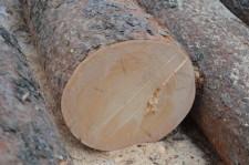 Рубят лес5