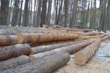 Рубят лес7