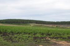 Фермеры Даниловы